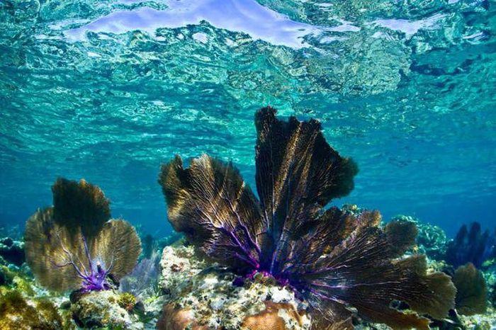 Кристально чистая вода (34 фото)