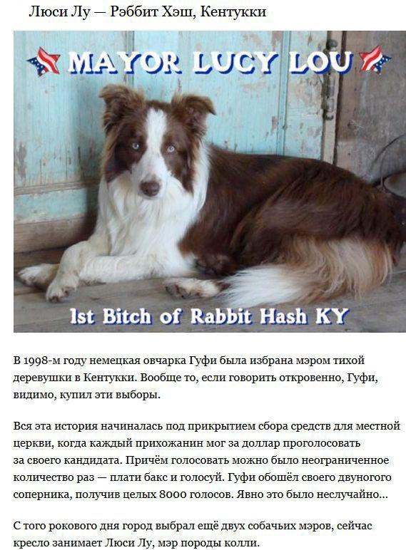 Животные, которые баллотируются на пост мэра (4 фото + текст)
