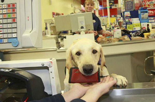 Уникальная специально обученная собака (8 фото)