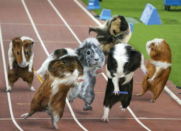 Смешной олимпийский календарь (12 фото)