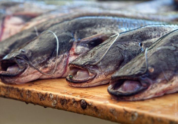 Закуска для любителей пива с рыбкой (32 фото)