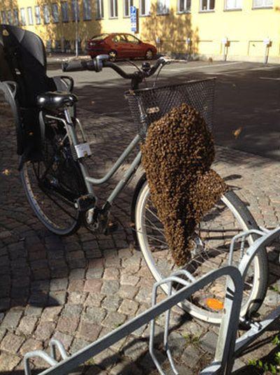 Лучшее противоугонное средство для велосипеда (2 фото)