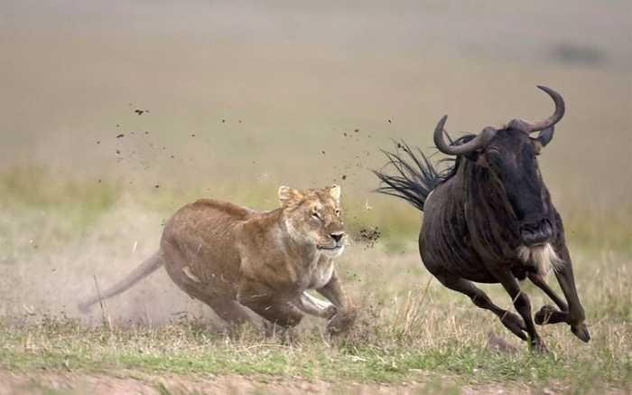Фотографии спортсменов и животные в таких же позах (28 фото)