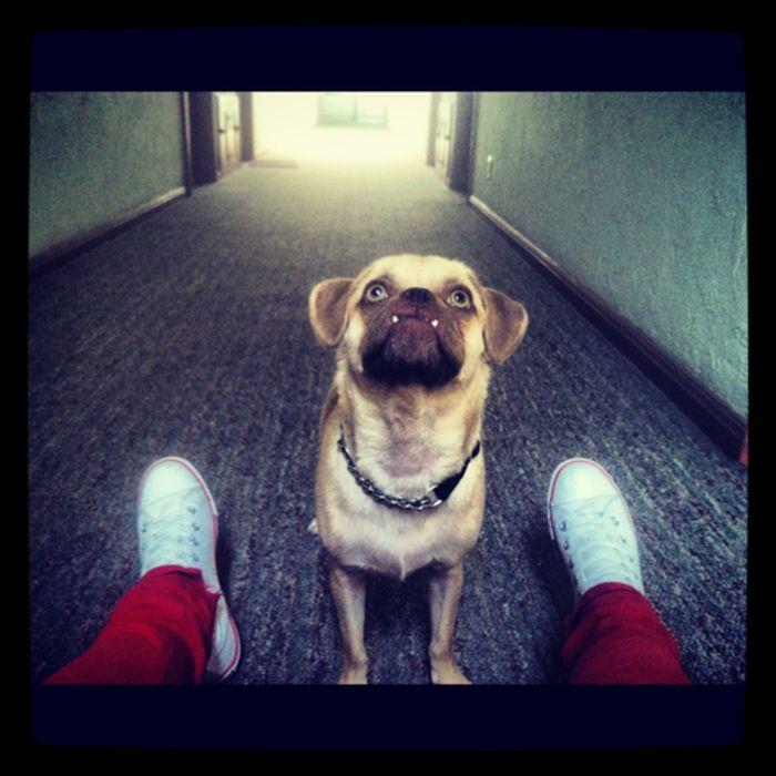 Смешные собаки с прикольным оскалом (25 фото)