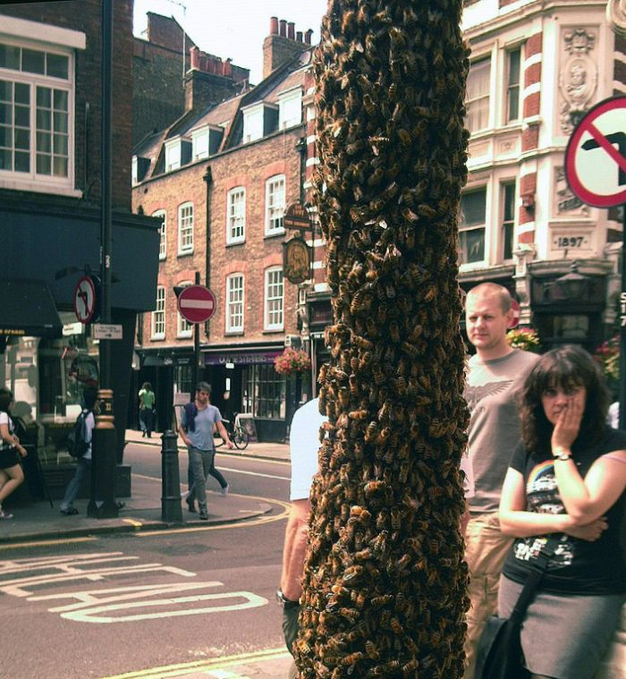 Тем временем в Лондоне (5 фото)