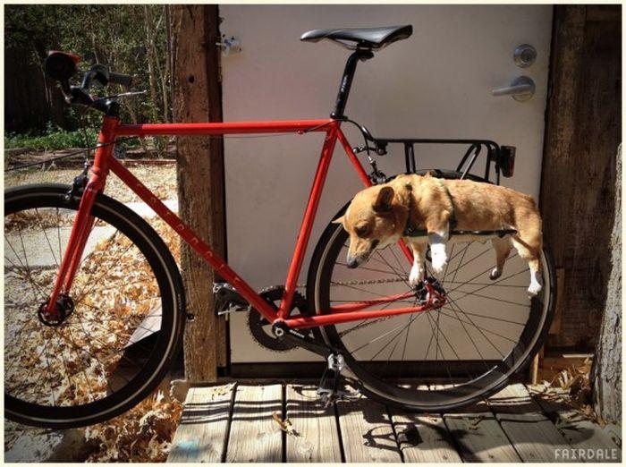 Багажник на велосипеде для собаки (4 фото)