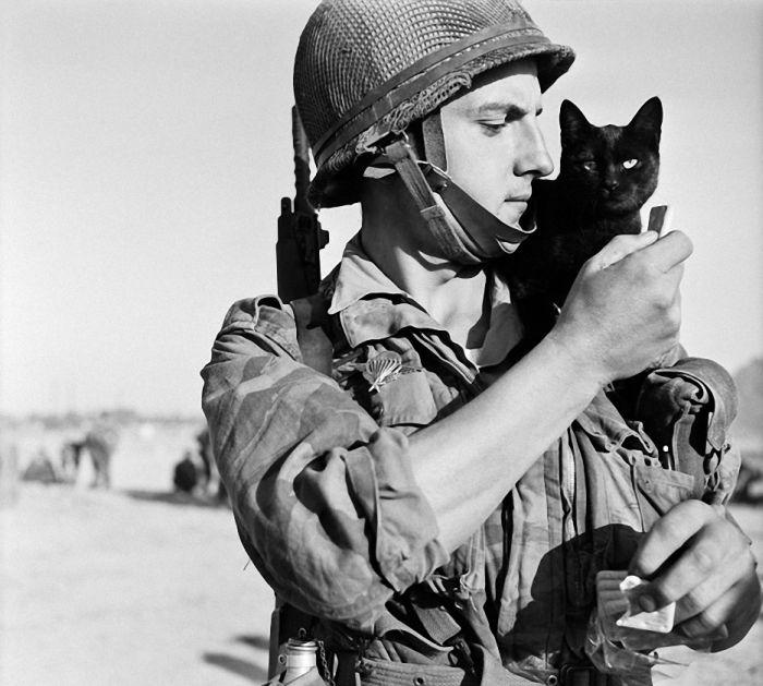 Коты, прошедшие войну со своими хозяевами (30 фото)