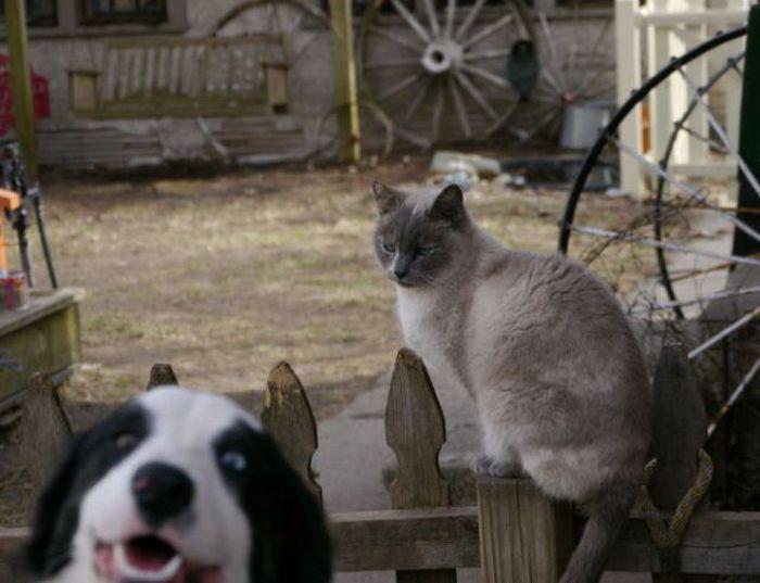 Фотобомбы с животными. Часть 21 (84 фото)