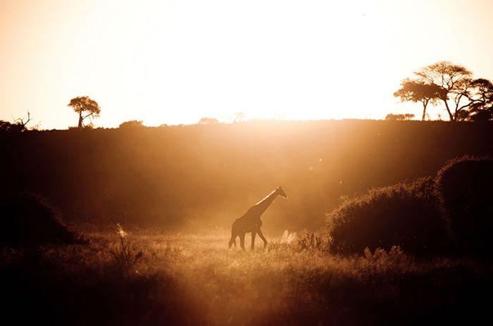 Завораживающие снимки от National Geographic (50 фото)