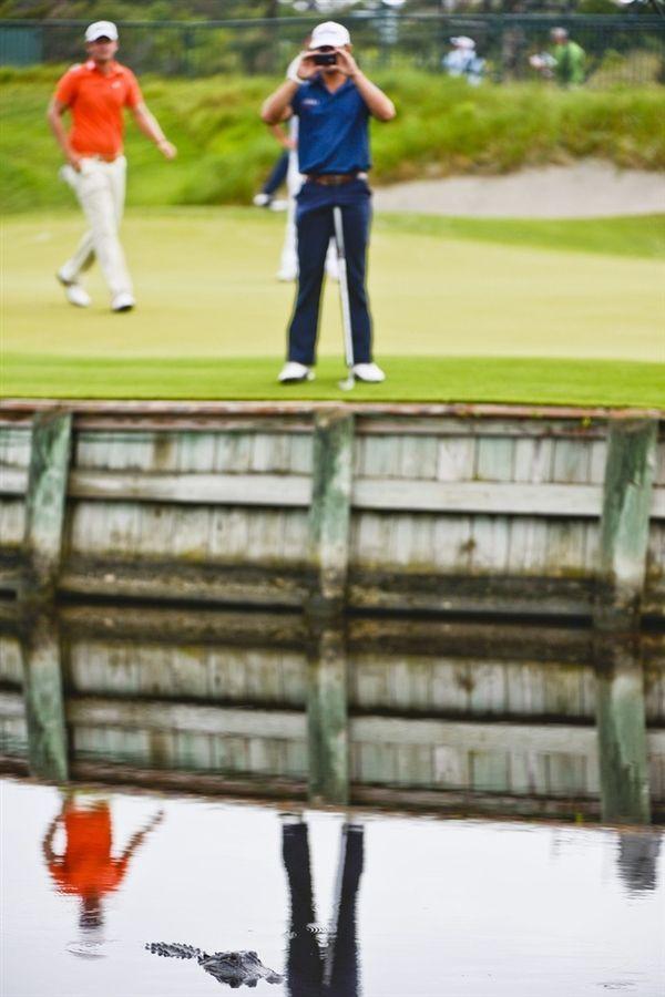 Гольф - опасный спорт (20 фото)