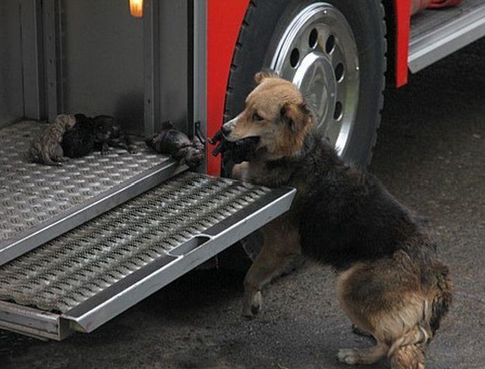 Спасение щенят (5 фото)