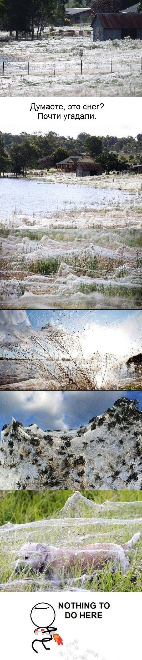 Прикольные картинки (120 фото)