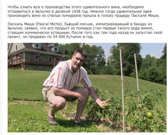 Секрет вина из томатов (7 фото + текст)