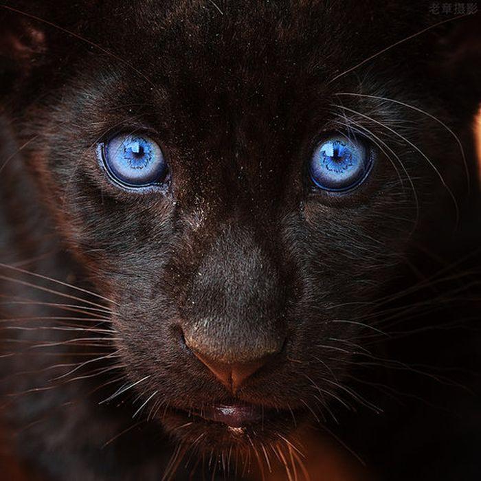İnanılmaz Hayvan Resimleri(12 Fotograf)