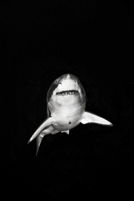 Удивительные снимки животных (120 фото)