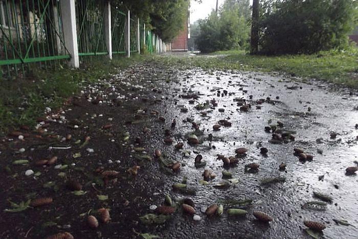 Град размером с яйцо обрушился на Кемеровскую область (43 фото)