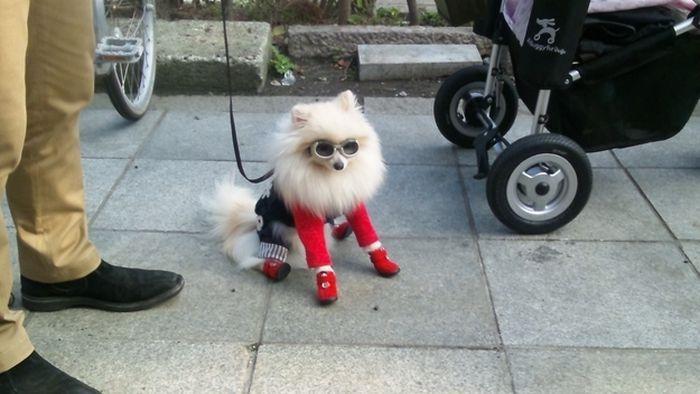 Креативная мода для стильных собак (50 фото)