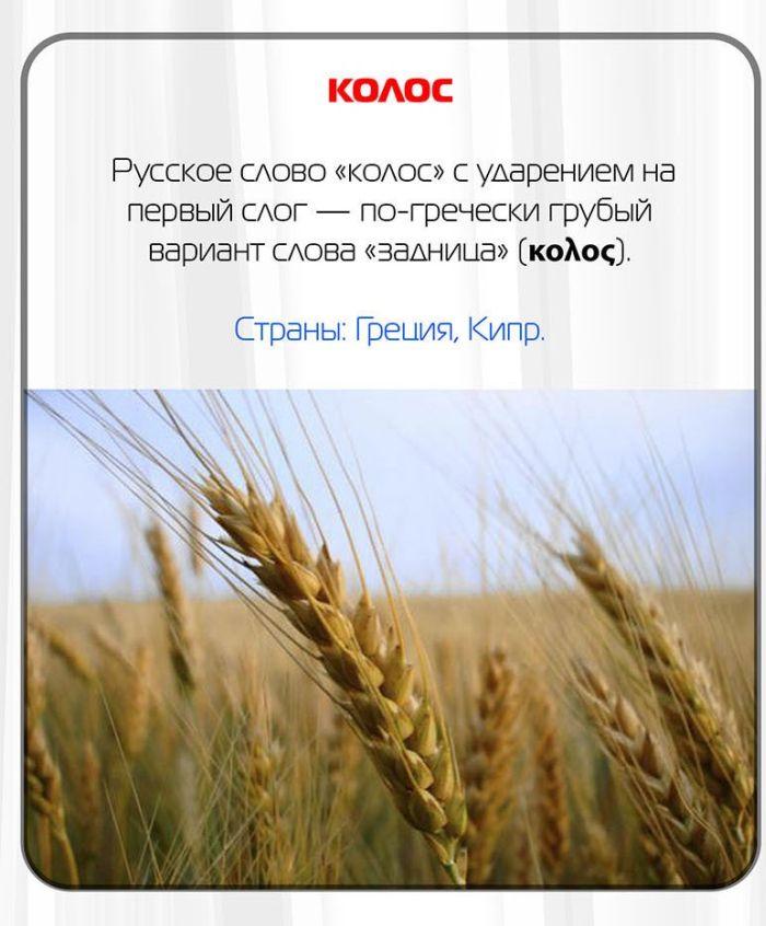 Какие русские слова нельзя произносить за границей (11 фото)