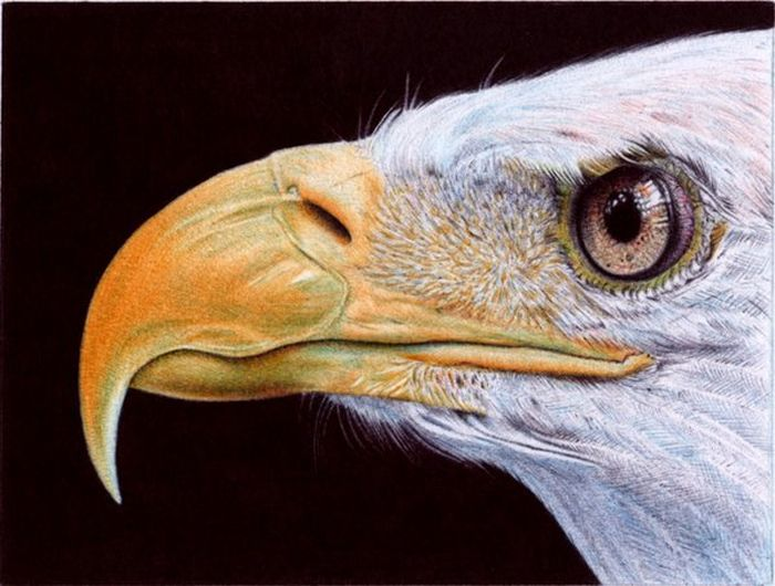 Удивительные рисунки цветными авторучками (24 фото)