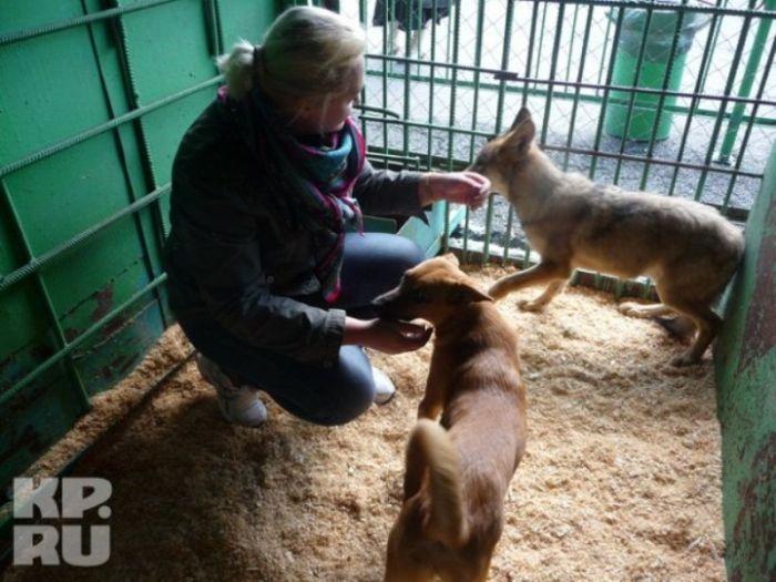 Трогательная история о собаке и волчонке (6 фото)