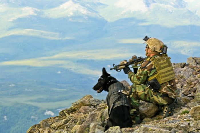 http://cdn.trinixy.ru/pics5/20120827/dogs_war_49.jpg