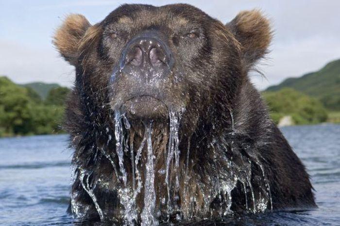 Как делают опасные снимки животных (4 фото)
