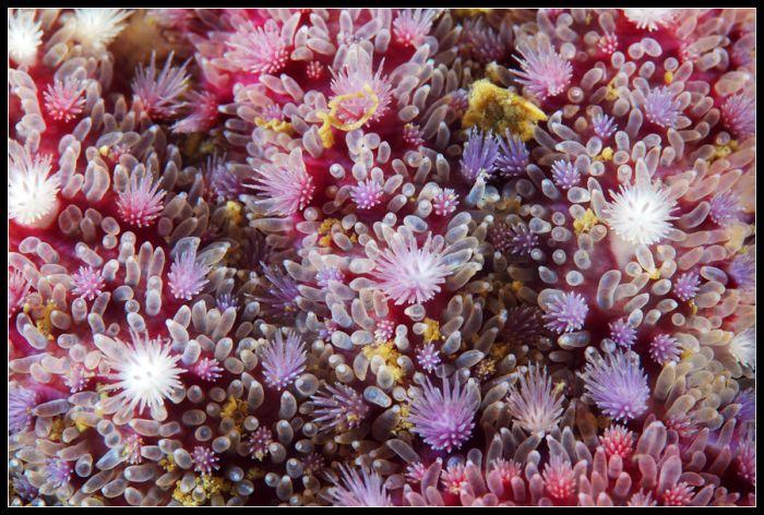 Удивительный подводный мир (45 фото)