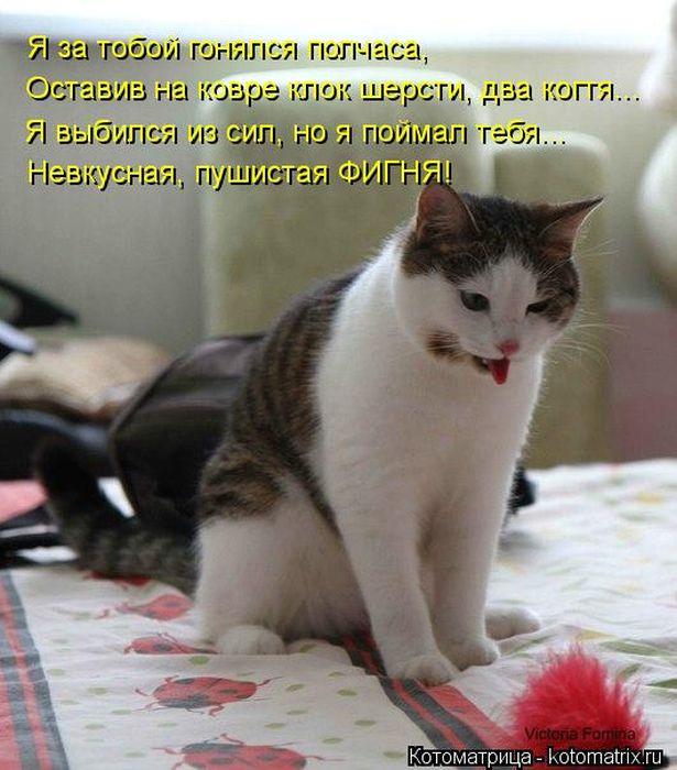 Про первоклассников, картинки котоматрица с надписями