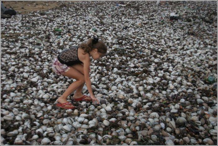 Тонны деликатесов выбросило на пляж (33 фото)