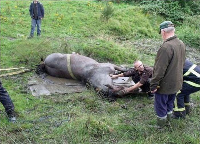 Спасение лошади из ловушки (7 фото)