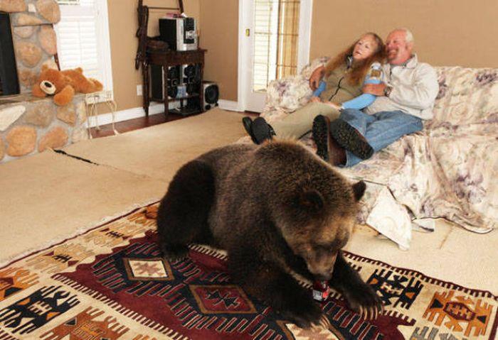 Медведи в домашних условиях 883