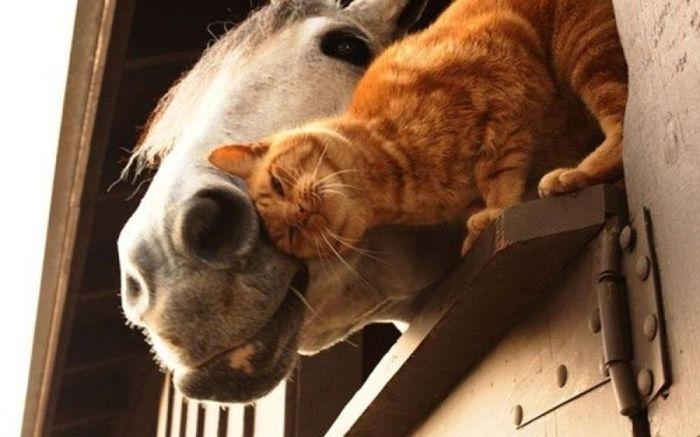 Позитивные снимки лучших друзей: котов и собак (25 фото)