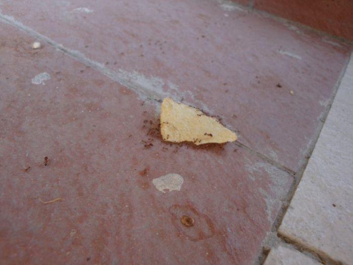 Karınca Gücünü ispatlayan resimler(22 Fotograf)