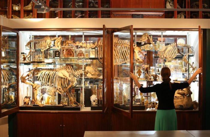 Londra Grant Zooloji Müzesi (38 fotograf)