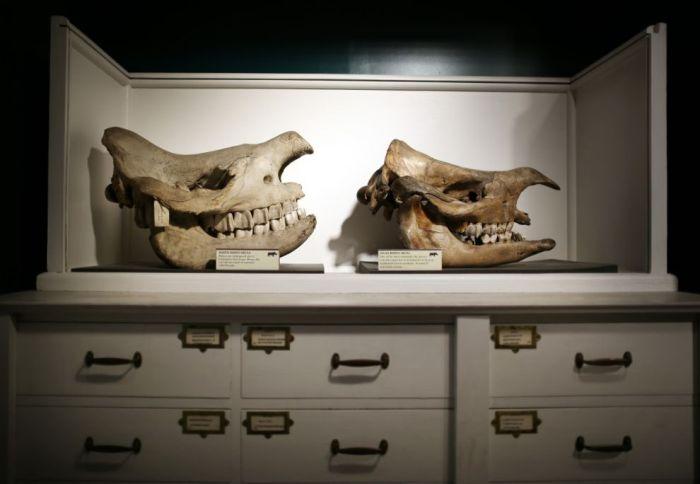Музей зоологии и сравнительной анатомии Гранта в Лондоне (38 фото)
