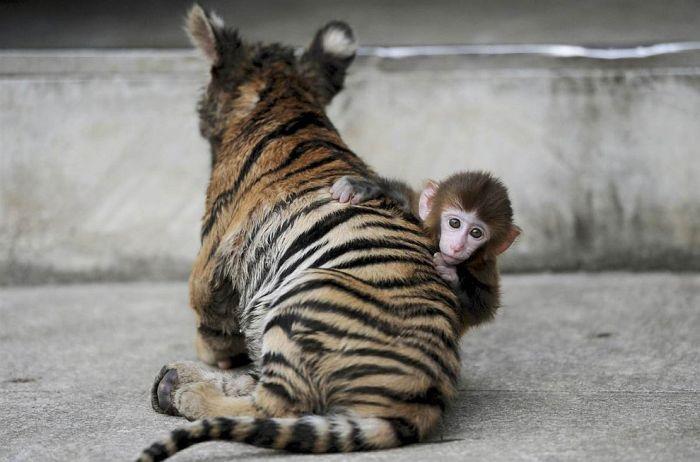 Животные в фотографиях (80 фото)