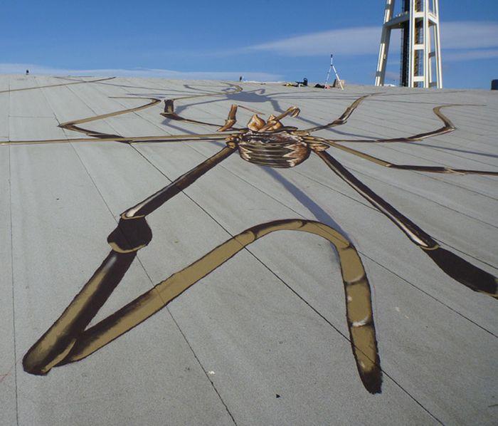 Огромный паук (4 фото)