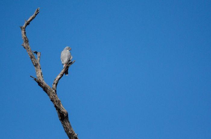 Дикая природа (118 фото)