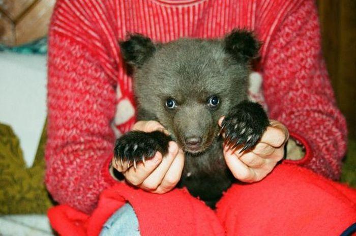 Домашний медведь (25 фото)
