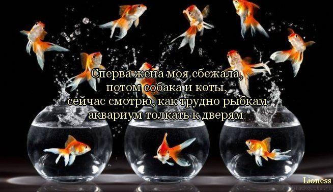 прикольные картинки с цитатами: