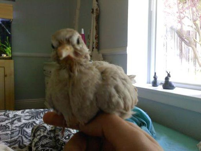 От рождения до превращения во взрослую птицу (31 фото)