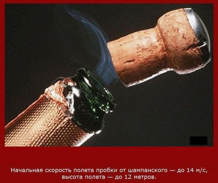 Познавательные факты о скорости предметов (19 фото)
