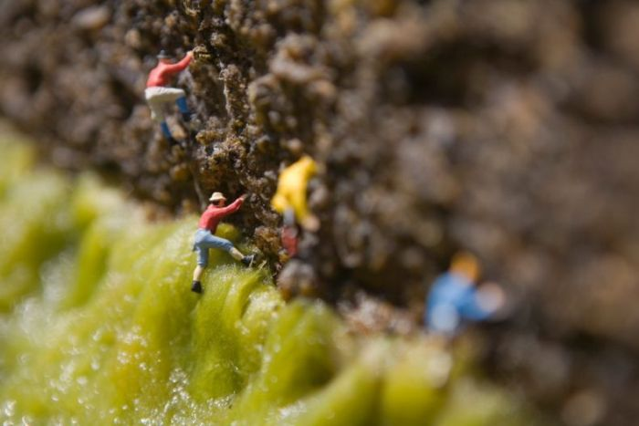 Креативные снимки миниатюрного мира (86 фото)