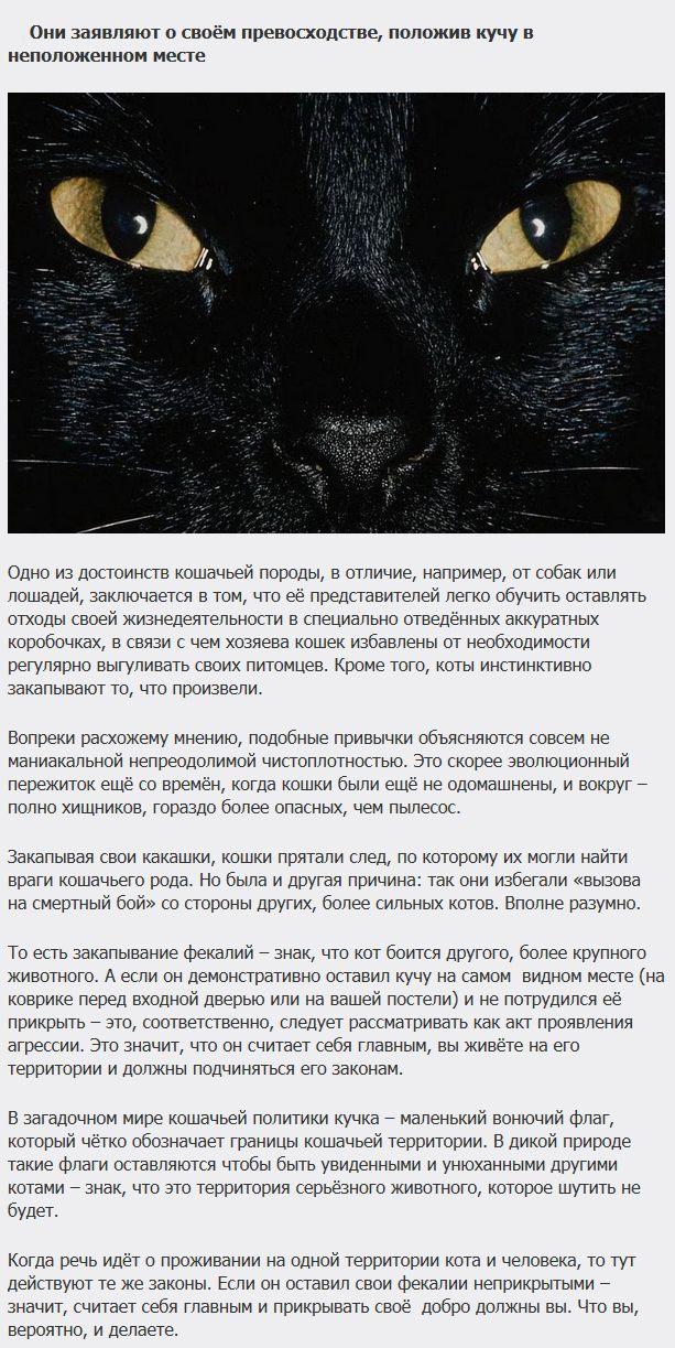 Интересное объяснение кошачьих повадок (6 фото)