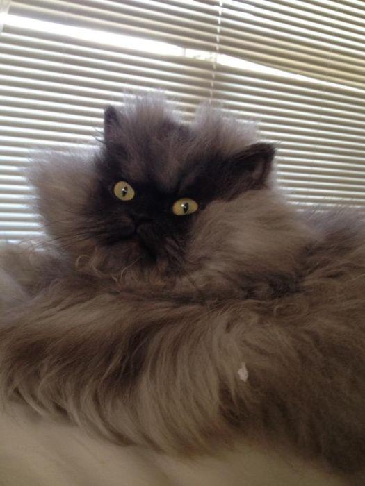 Самый суровый котэ в мире (28 фото)