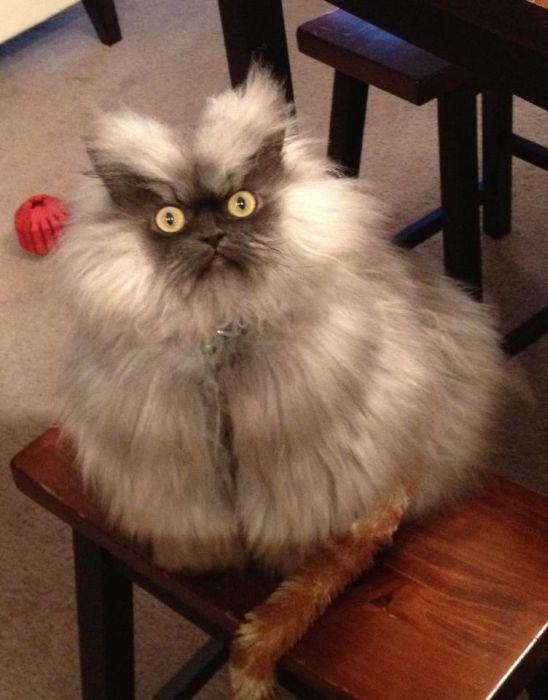 Le chat le plus grave dans le monde (28 photos)