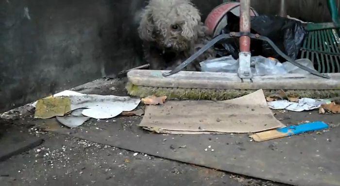 Новая хозяйка брошенной собачки (22 фото)