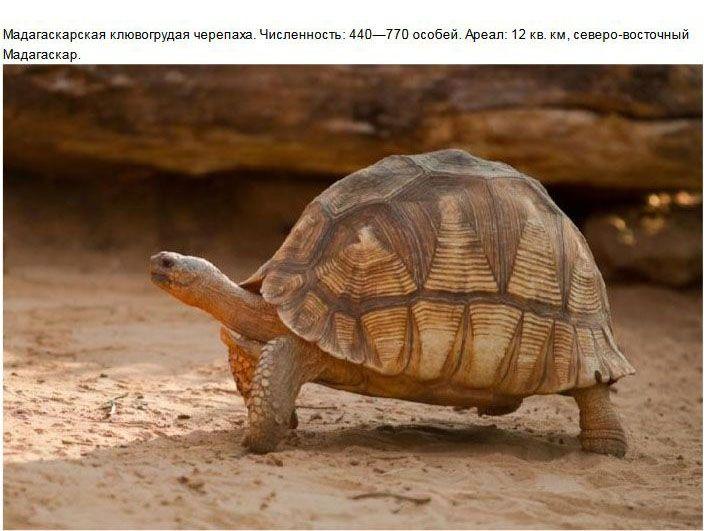 Редкие виды животных, которых мы больше не увидим (15 фото)
