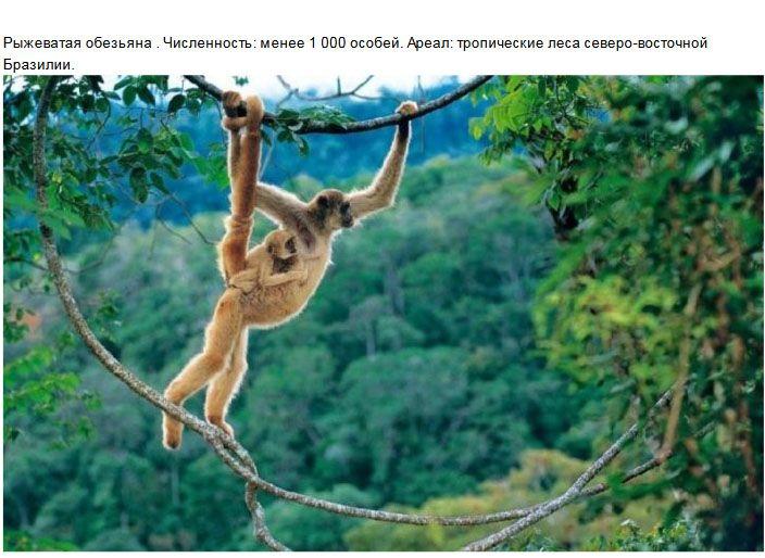 Редкие виды животных, к <!--