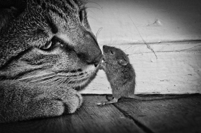 """Триллер: """"Кот и мышка"""" (6 фото)"""